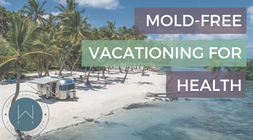 Everything You Need To Know About Home Mold Testing Wholesome Houses