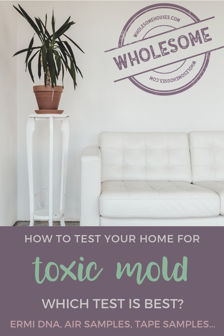 Everything You Need to Know About Home Mold Testing
